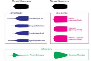 Hemostaze 2